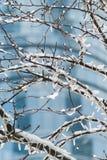 De zonnige mening van de dagstad in de winter met een boom in voorgrond en de moderne schrapers van de de bouwhemel op achtergron stock afbeeldingen