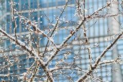 De zonnige mening van de dagstad in de winter met een boom in voorgrond en de moderne schrapers van de de bouwhemel op achtergron royalty-vrije stock foto's