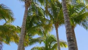 De zonnige van de palmbovenkanten van dagmiami wind bewegend 4k Florida de V.S. stock video