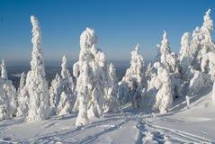 De zonnige winter Royalty-vrije Stock Fotografie