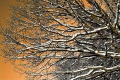 De zonnige winter stock afbeeldingen