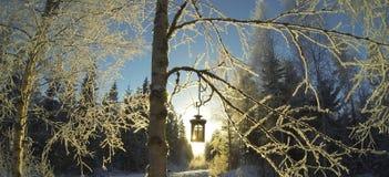 De zonnige winter Stock Afbeelding