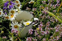 De zonnige de zomerdag liggen de wilde geneeskrachtige bloemen in een oude metaal witte kop royalty-vrije stock foto