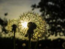 De zonsondergang door een installatie royalty-vrije stock foto's
