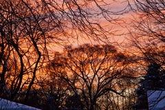 De zonsondergang na een sneeuwstorm gloeit rood en oranje over snow-covered bomen en daken Royalty-vrije Stock Fotografie