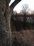 De zonsondergang op een de herfstdag Royalty-vrije Stock Foto