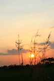 De zonsondergang op het gebiedsSilhouet Stock Foto's