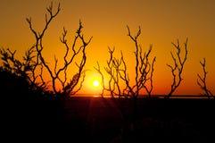 De zonsondergang op kust achter kust schrobt, Cape Cod royalty-vrije stock foto