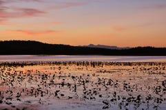 De zonsondergang op lilly vult meer op Stock Fotografie