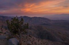 De zonsondergang sluit Mening, Joshua Tree National Park 2 Stock Foto's