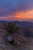 De zonsondergang sluit Mening, Joshua Tree National Park Stock Fotografie