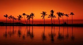 De zonsondergang tropische palmen van het paradijsstrand Stock Foto's