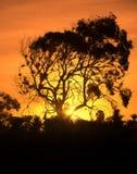 De zonsondergang van Afrika Stock Afbeelding