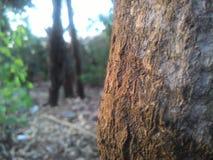 De zonsondergang van de boomboomstam klikt royalty-vrije stock foto