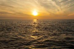 De Zonsondergang van de cardiganbaai royalty-vrije stock afbeeldingen