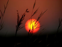 De Zonsondergang van de Bladen van het gras royalty-vrije stock foto's