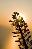 De Zonsondergang van de bloem royalty-vrije stock afbeeldingen