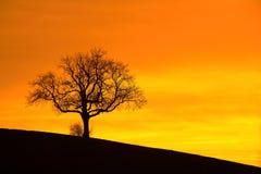 De zonsondergang van de boom Stock Foto