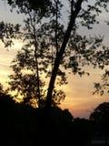 De zonsondergang van de boom stock fotografie