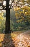 De zonsondergang van de herfst Royalty-vrije Stock Afbeelding