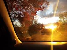 De zonsondergang van de herfst Bos in Roemenië Royalty-vrije Stock Afbeelding