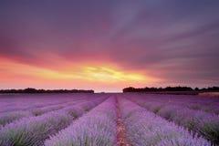 De zonsondergang van de lavendel Stock Afbeelding