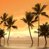 De zonsondergang van de palm stock foto's