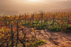 De zonsondergang van de wijngaardherfst royalty-vrije stock foto