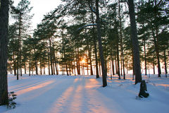 De zonsondergang van de winter royalty-vrije stock fotografie