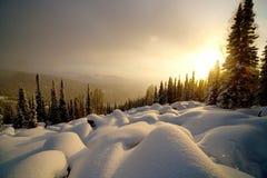 De zonsondergang van de winter in het bos Stock Afbeeldingen