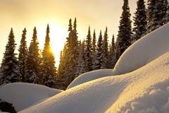 De zonsondergang van de winter in het bos Stock Fotografie