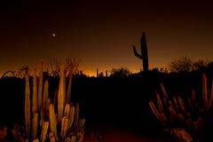 De zonsondergang van de woestijn royalty-vrije stock afbeeldingen