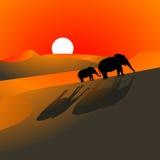 De Zonsondergang van de Woestijn van olifanten Stock Fotografie