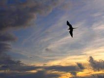 De Zonsondergang van de zeemeeuw Stock Afbeeldingen