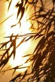 De zonsondergang van de zomer royalty-vrije stock foto