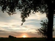 De zonsondergang van de zomer met boom royalty-vrije stock afbeeldingen