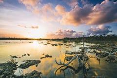 De Zonsondergang van drijfhoutreflectin Royalty-vrije Stock Foto's
