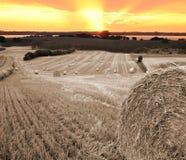 De zonsondergang van Harvst Stock Foto's