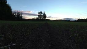 De zonsondergang van de de herfsttijd over gewassengebied, tijdtijdspanne stock video