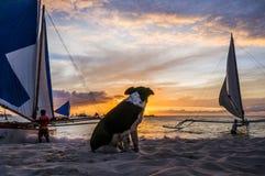 De zonsondergang van het hondhorloge bij strand Stock Foto
