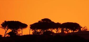 De zonsondergang van het landschap Stock Afbeelding