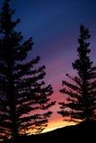 De Zonsondergang van het Overzicht van de boom Royalty-vrije Stock Afbeeldingen