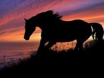 De zonsondergang van het paardsilhouet royalty-vrije stock afbeeldingen