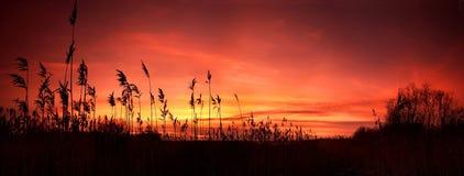 De zonsondergang van het panorama Royalty-vrije Stock Afbeeldingen