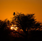 De Zonsondergang van Kalahari Stock Foto