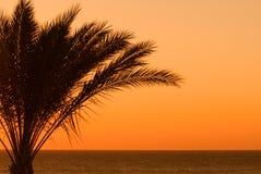 De zonsondergang van Palmtree royalty-vrije stock foto