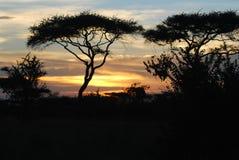 De Zonsondergang van Serengeti stock afbeeldingen