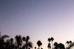 De zonsondergang van de silhouetpalm met gele en violette hemel en palm Royalty-vrije Stock Afbeelding