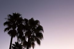 De zonsondergang van de silhouetpalm met gele en violette hemel en palm Stock Foto's