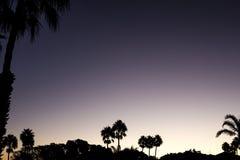 De zonsondergang van de silhouetpalm met gele, rode en violette hemel en palm Stock Fotografie